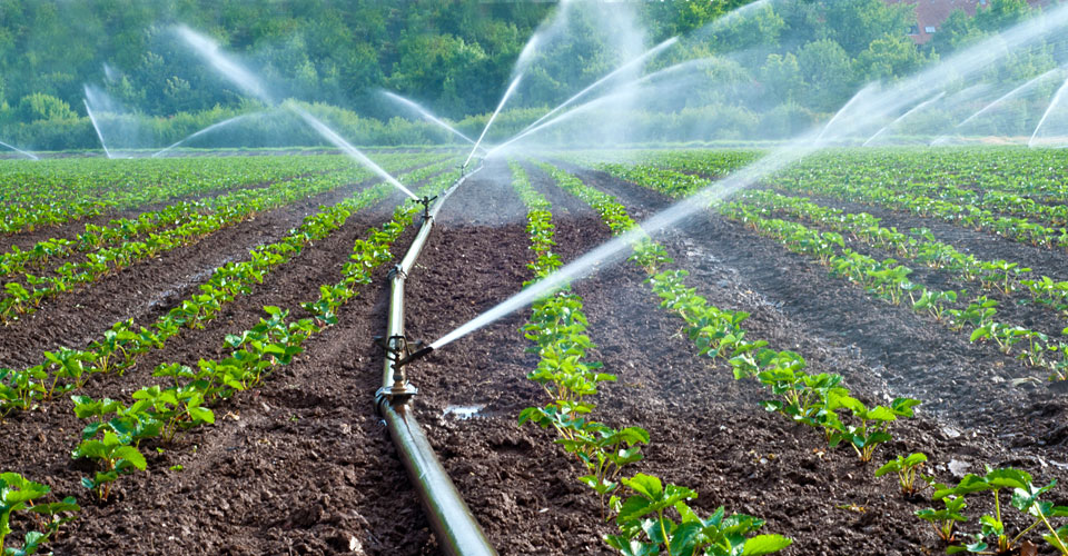 Plants are watered at regular timings