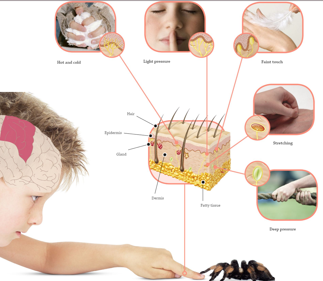 3D_002_Research: Hearing and Touch | Taa >.@