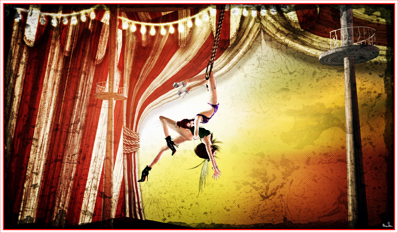 role and concept of slearys circus Please select which section of the site you would like to access today.