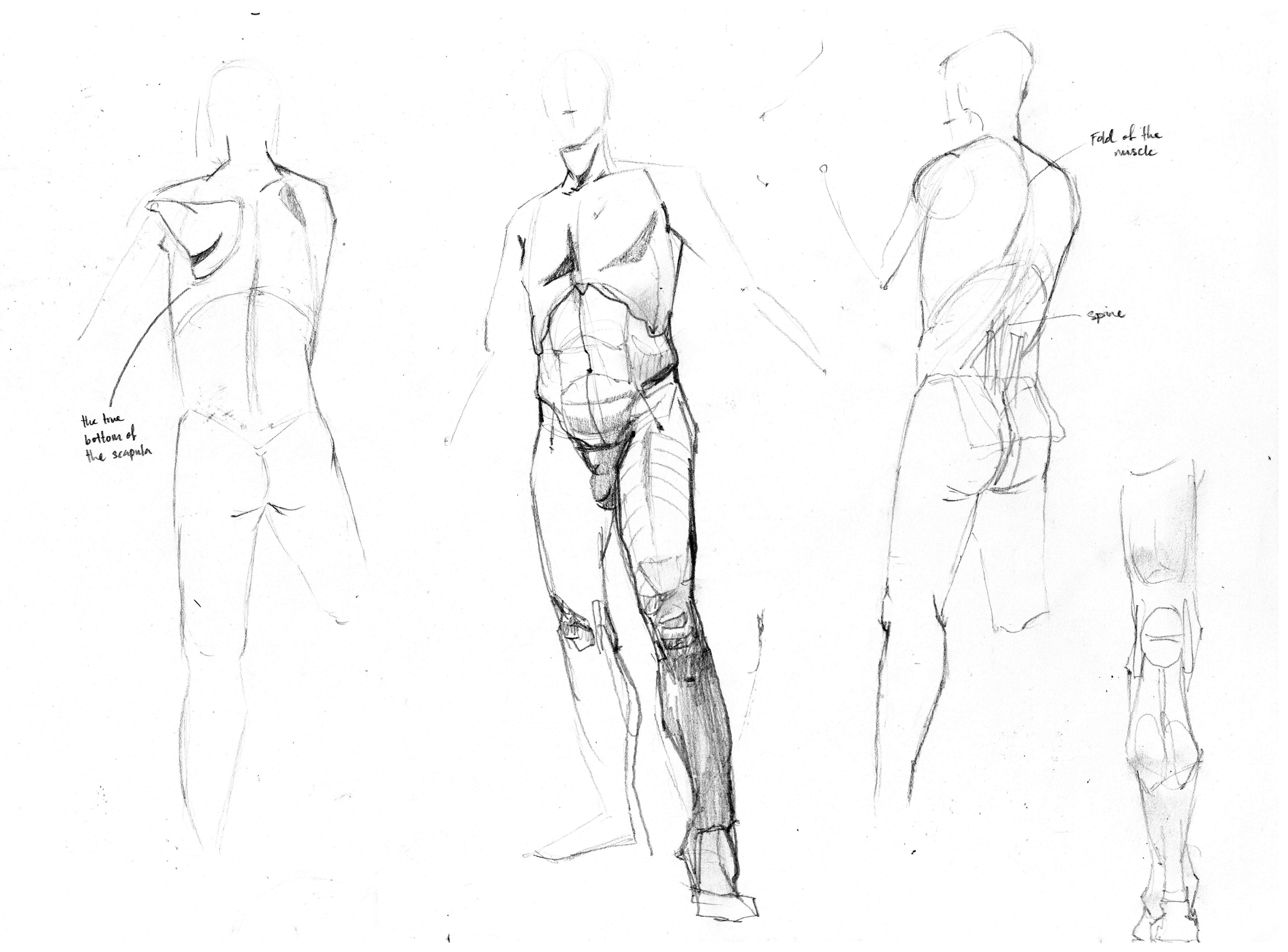 Kinetic Anatomy: Dynamic Figure Drawing for Artists and Designers ...