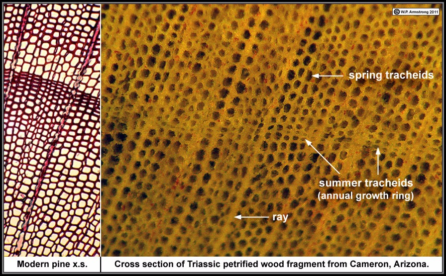 wood structure and properties Full article effect of hcl on starch structure and properties of starch-based wood adhesives hongwei yu, qun fang, yuan cao, and zhikun liu starch-based adhesive was prepared from corn starch and polyvinyl alcohol (pva) as raw materials by acid hydrolysis with hcl.