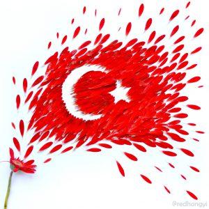 turkey-1024x1024