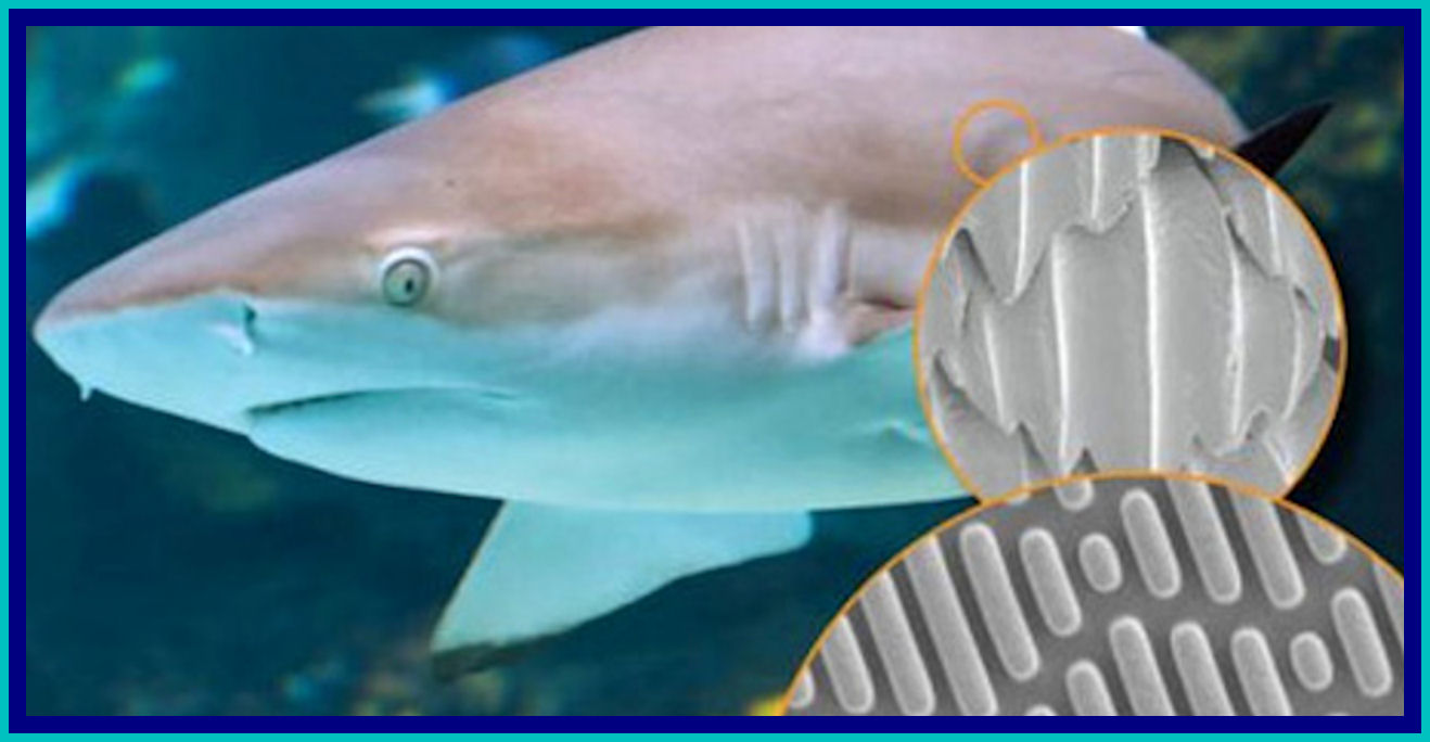 discovery-that-shark-skin-actually-generates-thrust-to-give-the-fish-an-additional-boost