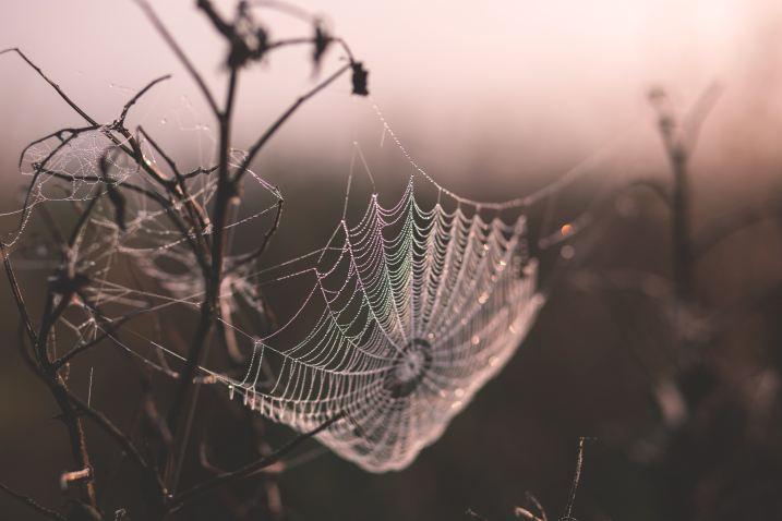 Research   Biomimicry