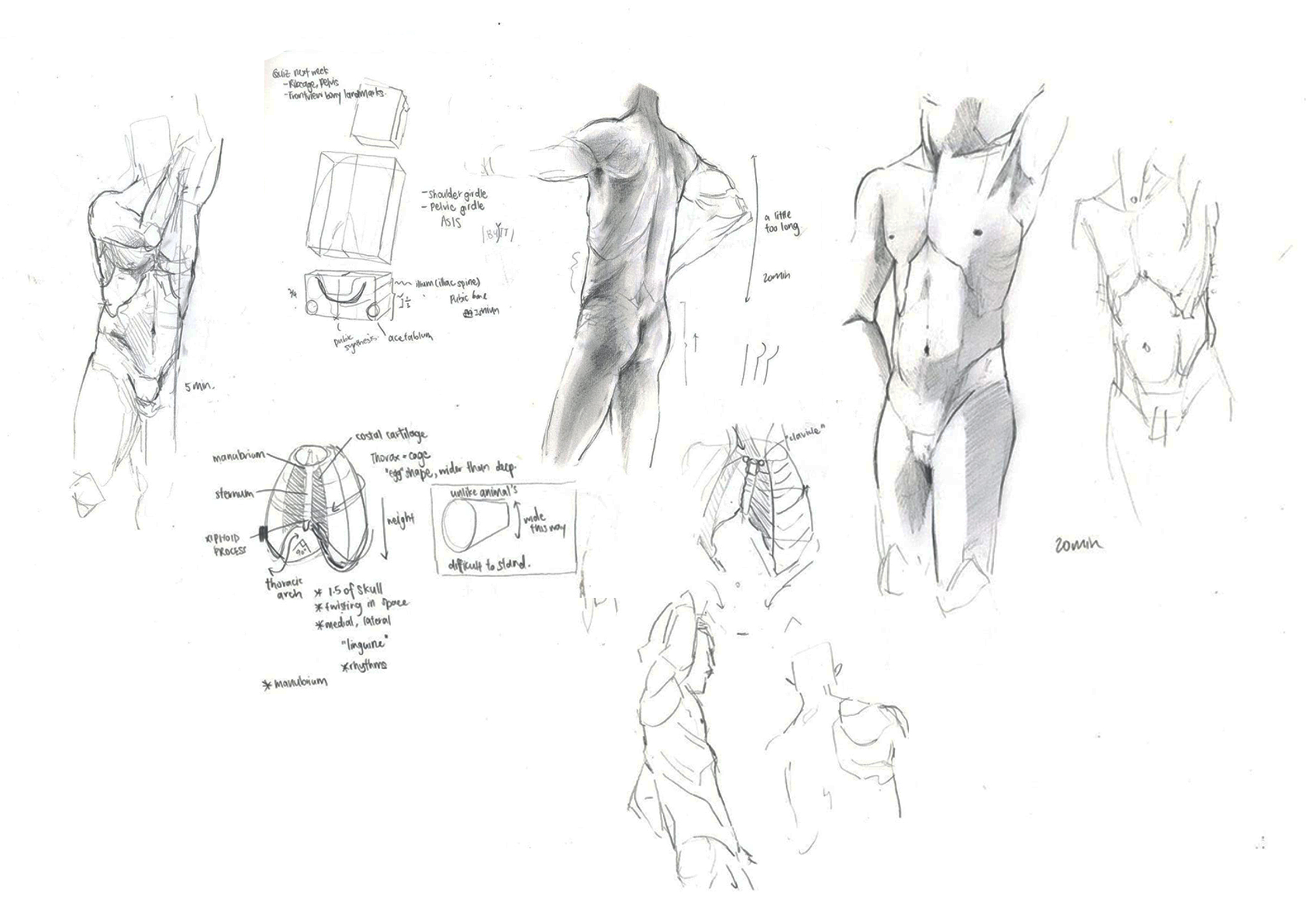 anatomy – Natasha Lim