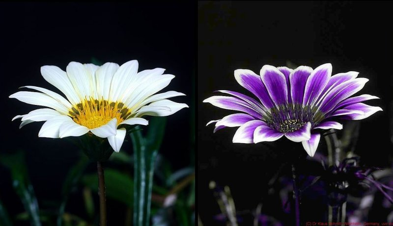 How Bees see flowers