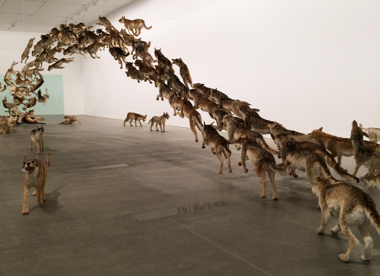 Cai Guo-Qiang Head On (2013), Brisbane Gallery of Modern Art