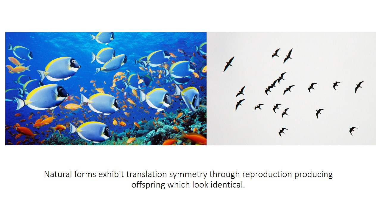 Examples of natural forms with translational symmetry are: A school of the same species of fishes and a flock of birds. They exhibit translation symmetry through reproduction—creating similar looking offspring.