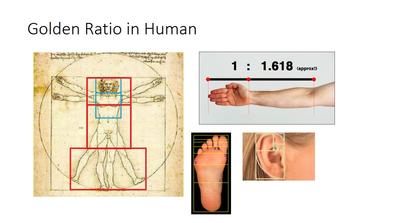 Golden ratio even exist in our body proportions from our body, arm, ear and even feet.
