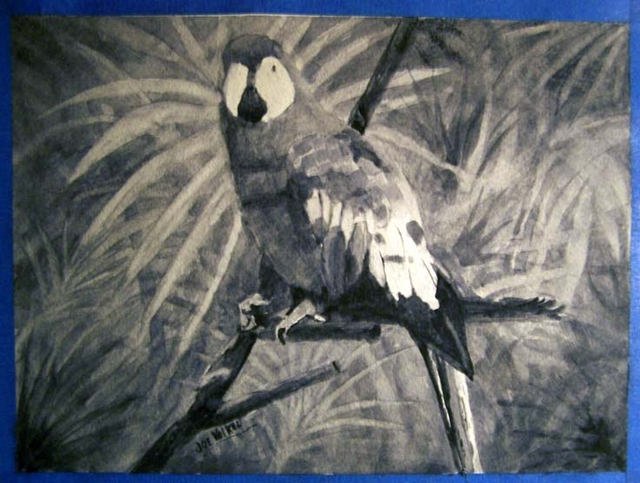 Parrot painting in Payne's grey by Joe Volkel